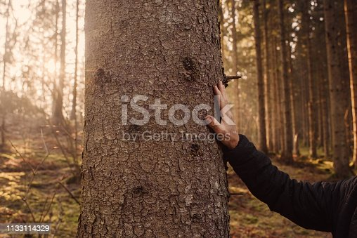 Man worried of the nature and forest enviromental hand on bark THe woods being cutted down and attaced by pests lie bark beetle
