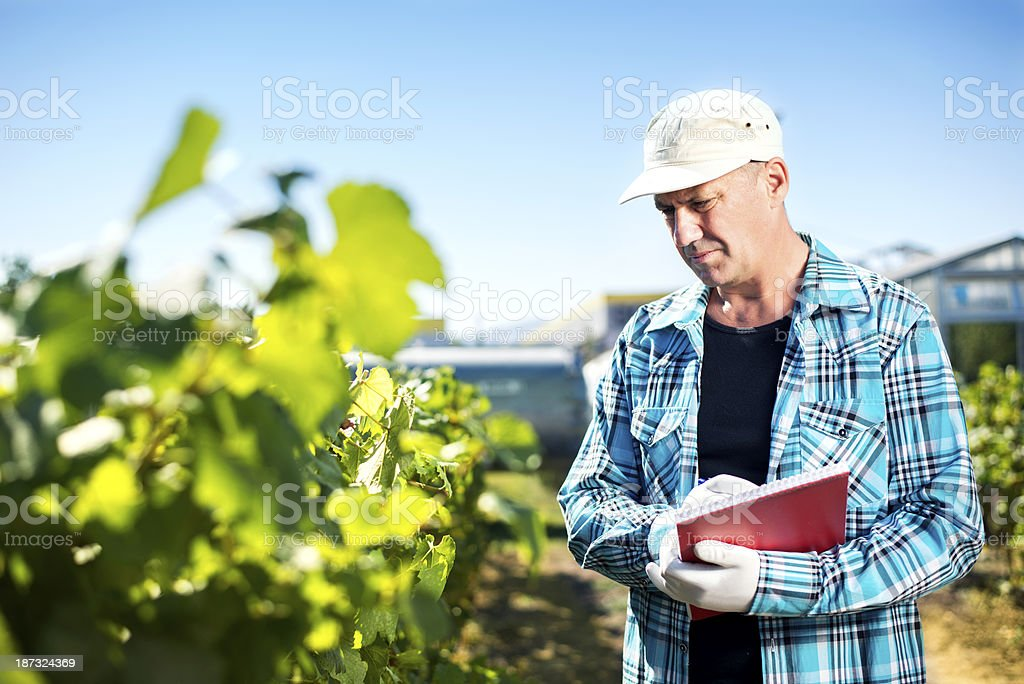 Man writing on notebook while inspecting vineyard stock photo
