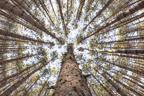 Perspective de forêt aménagée - Photo