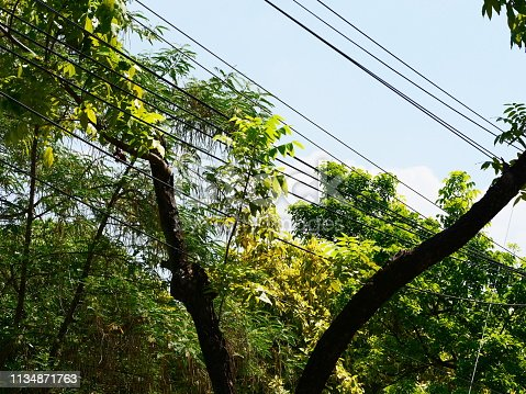 Front or Back Yard, Springtime, Israel, Power Cable, Agriculture