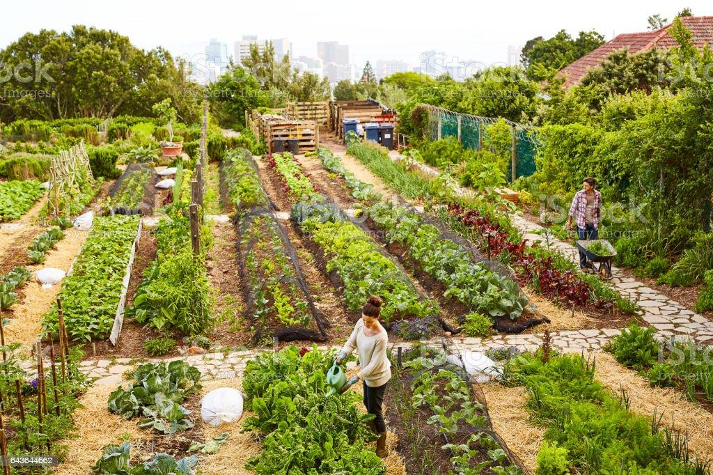 Managing their urban garden stock photo