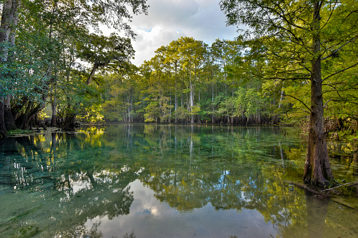 Manatee Springs on the Suwanee River, Florida