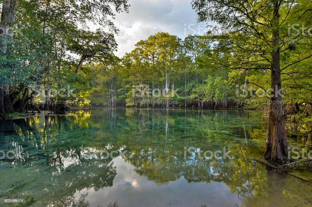 Manatee Springs on the Suwanee River, Florida stock photo