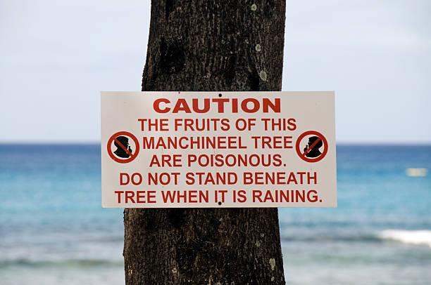 Manchineel Tree stock photo