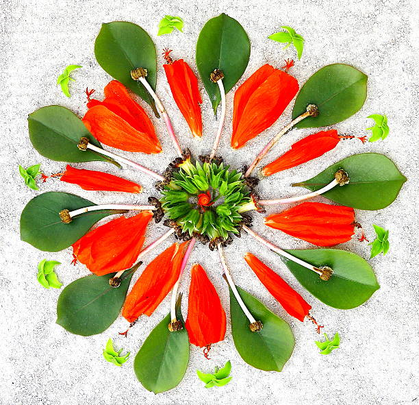 Mandala with natural elements stock photo