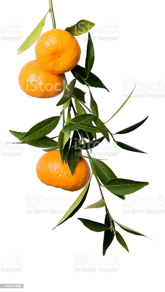 Mandarino branch - foto stock