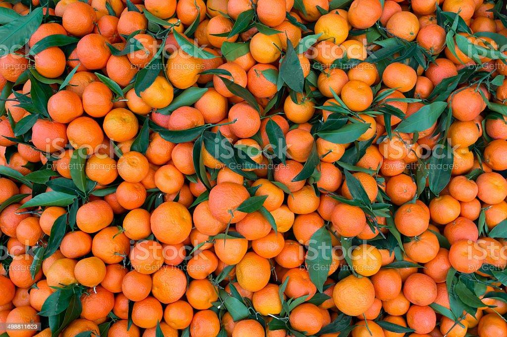 Mandarin. Orange. Tangerine. stock photo