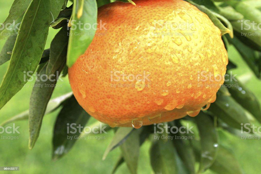 Mandarin - Foto de stock de Agricultura royalty-free