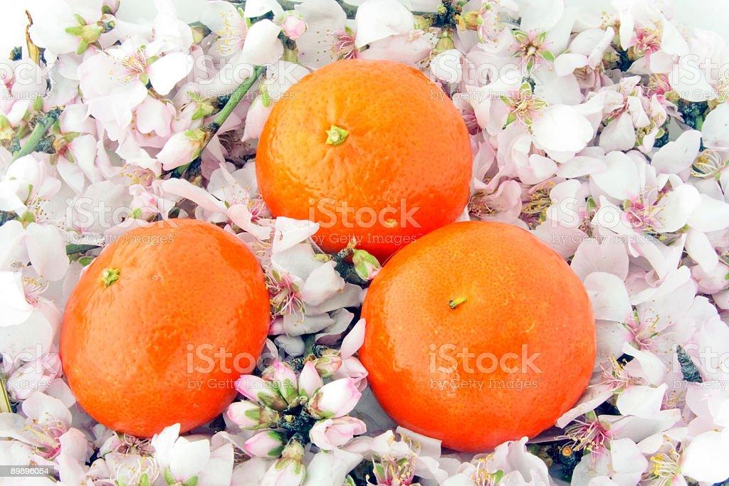 Mandarins en un cuadro floral foto de stock libre de derechos