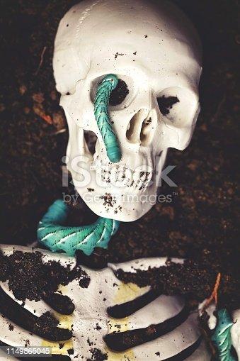 Manduca hornworm caterpillar on a skeleton, buried.