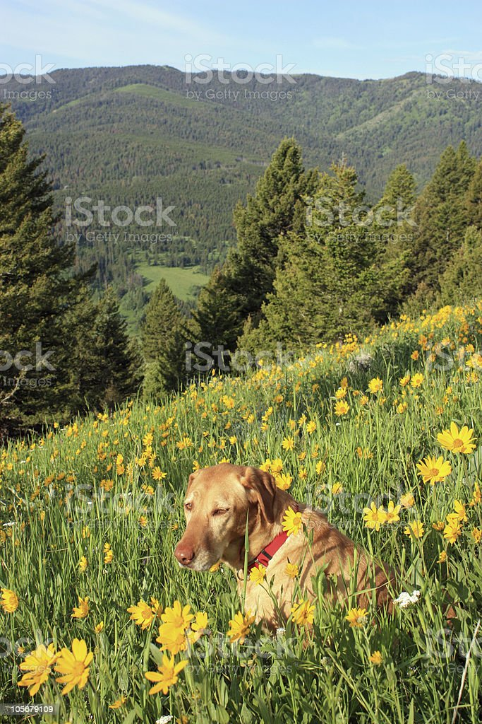 Mandy and Gallatin Forest background stock photo
