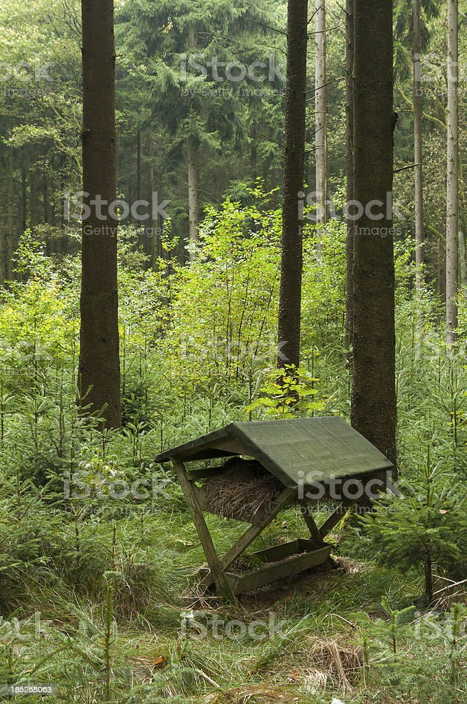 Manger in the forest stock photo