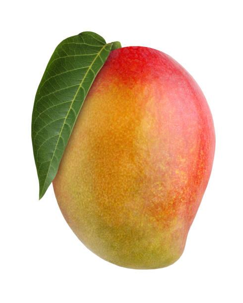 mango, aislado sobre fondo blanco. - mango fotografías e imágenes de stock
