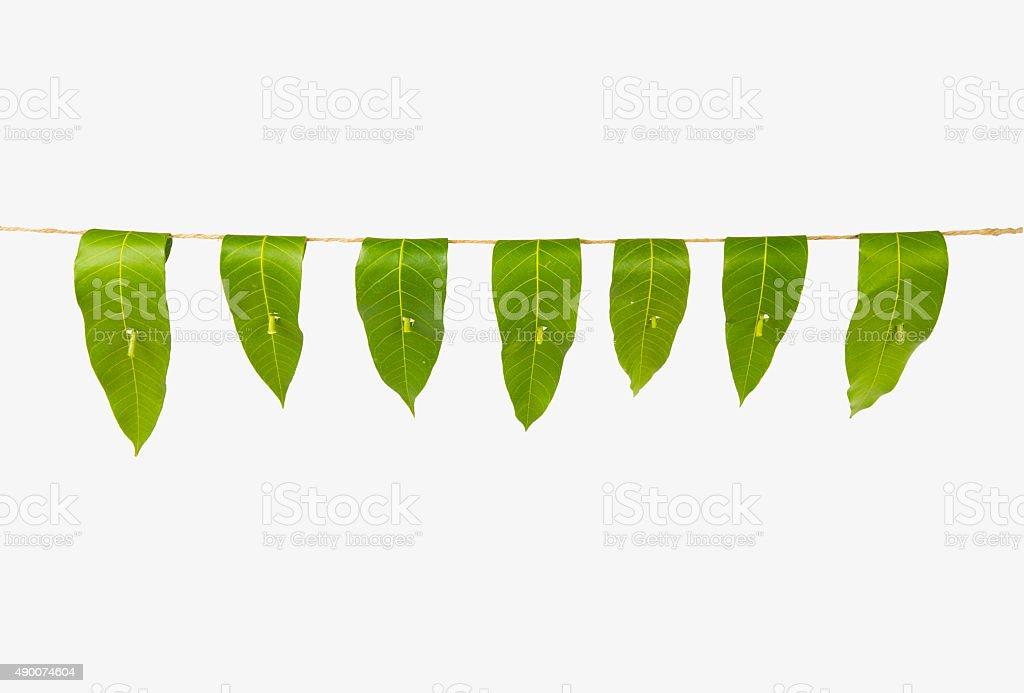 mango leaf toran or garland, indian hindu tradition stock photo