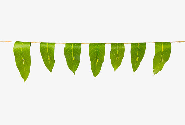mango leaf toran or garland, indian hindu tradition - garland decoration stock photos and pictures