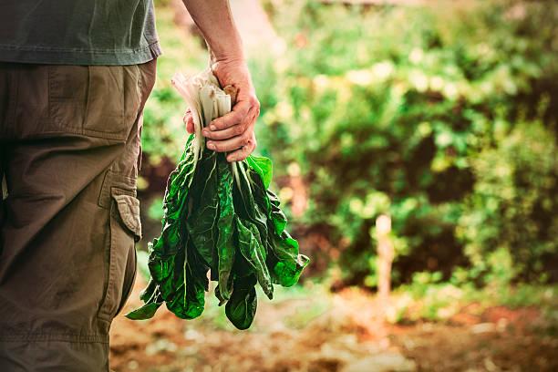 chardonnay grape - bio lebensmittel stock-fotos und bilder