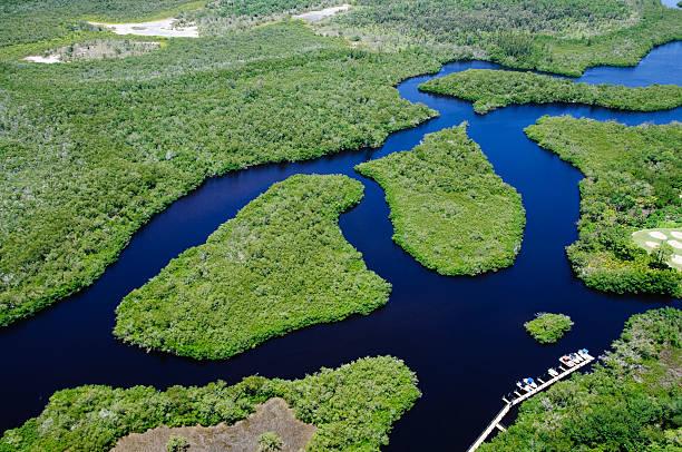 fluxo de mangove - estuário imagens e fotografias de stock