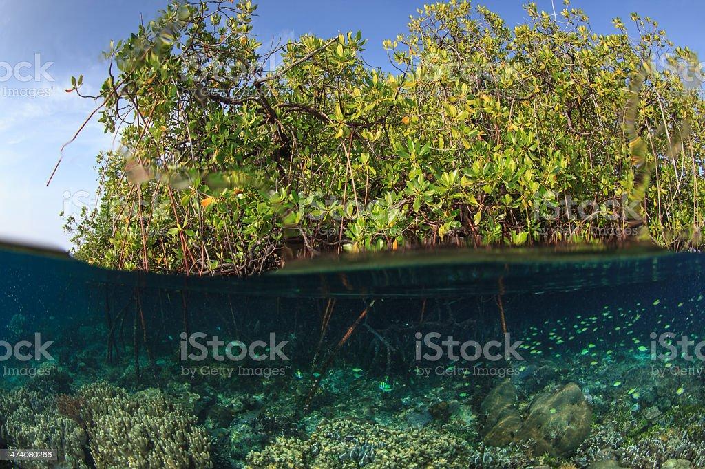 Mangrove and the reef,Raja ampat,Indonesia stock photo