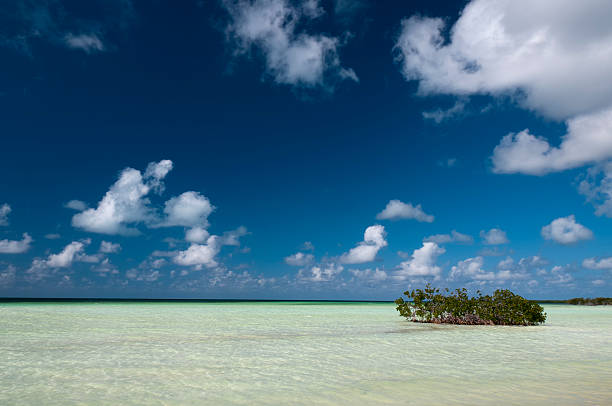 mangrove fields near cayo blanco, cuba - mahroch stock pictures, royalty-free photos & images