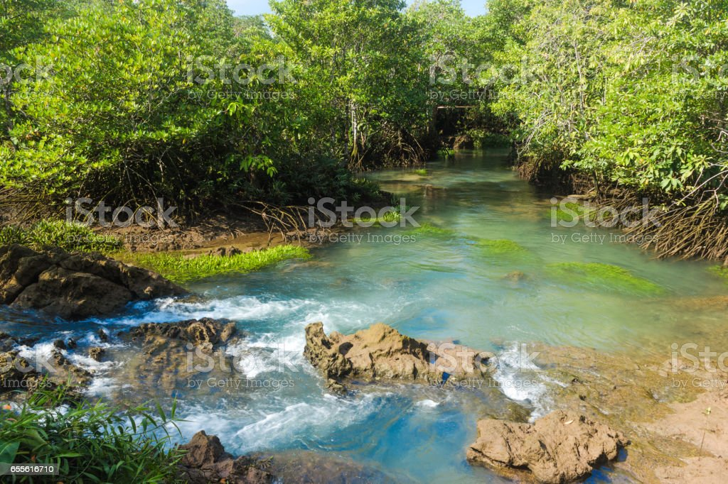 Mangrove forest and a river landscape at Thapom, Klong Song Nam, Krabi, Thailand stock photo
