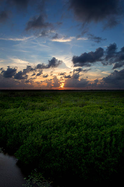 Mangrove forest and beautiful sunset stock photo