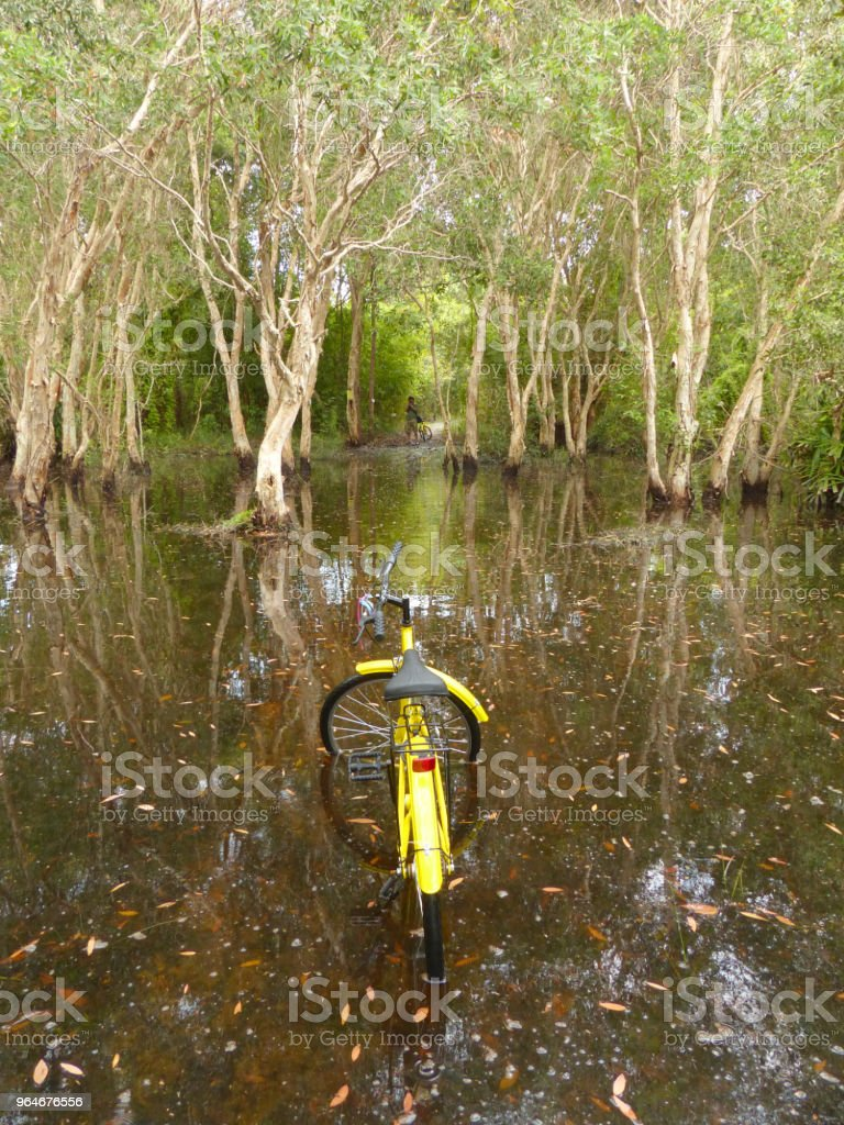 Mangrove forest and bike royalty-free stock photo