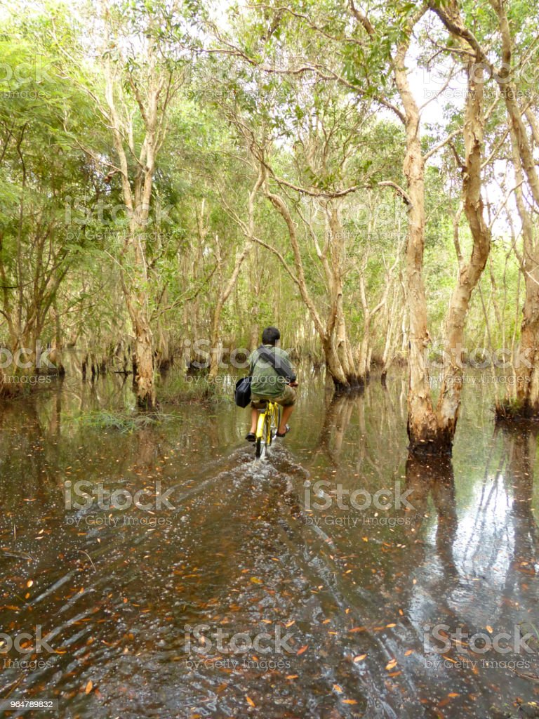 Mangrove forest and man ride bicycle royalty-free stock photo