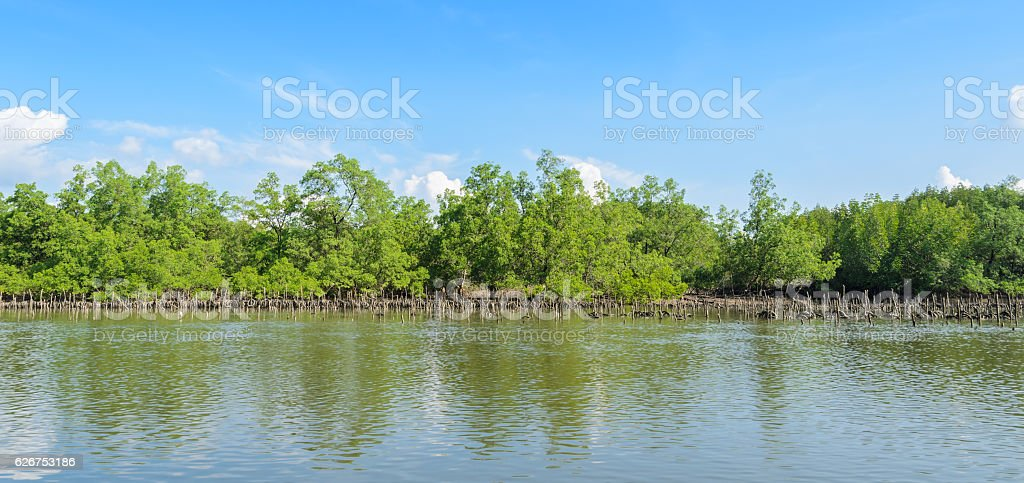 Mangrove forest and oyster farming in Thailand stock photo