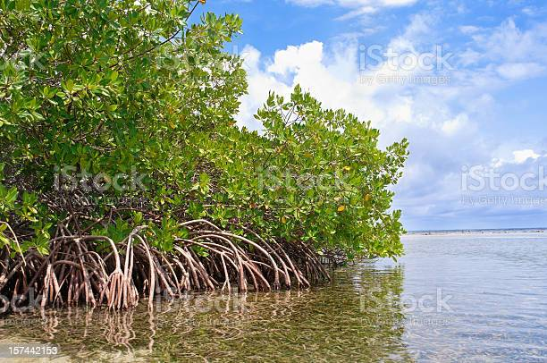 Mangrove forest and shallow waters in a Tropical island.-