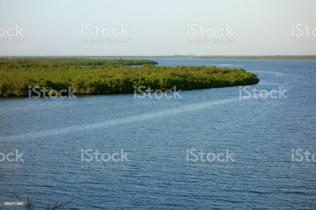 Mangrove forest in the Sine Saloum Delta, Senegal stock photo