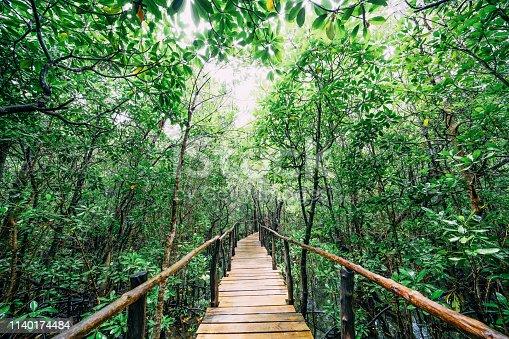 Mangrove Forest in Zanzibar, Tanzania, Africa Jozani Chwaka Bay National Park