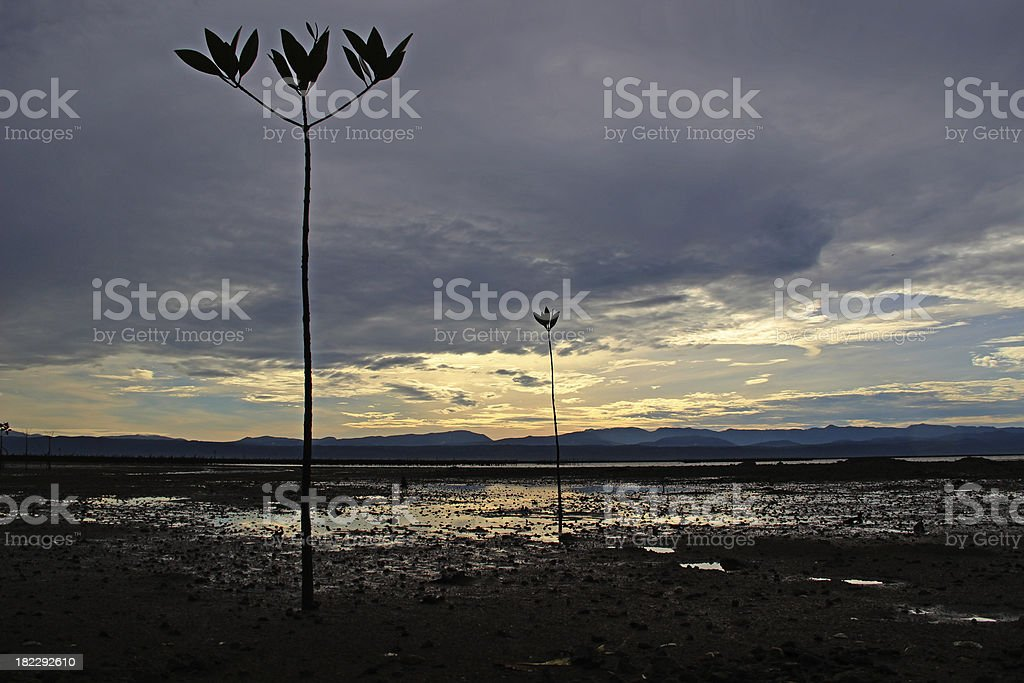 Mangrove forest - Stock Image royalty-free stock photo