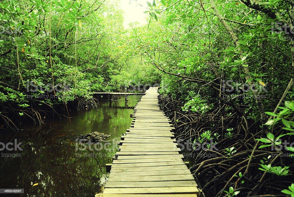 Mangrove in Zanzibar stock photo