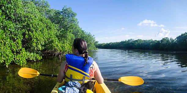 Mangrove Kayaker stock photo