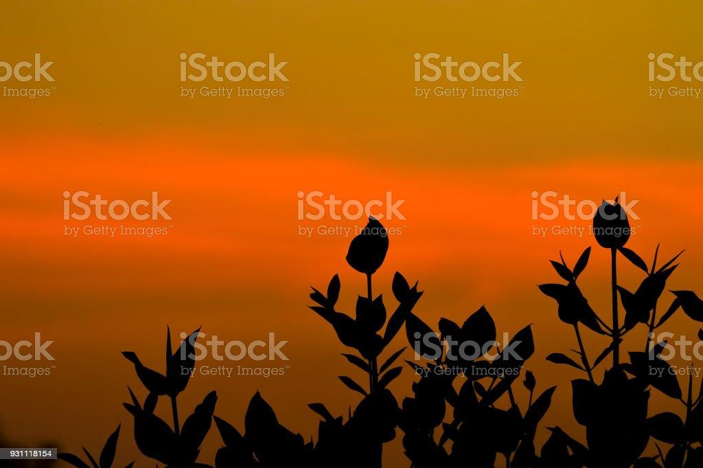 mangrov ağaç - Royalty-free Akşam karanlığı Stok görsel