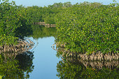 This is a horizontal color photograph of the mangrove landscape in the wetlands marsh area of 10,000 Islands in Everglades City, Florida on a winter day.