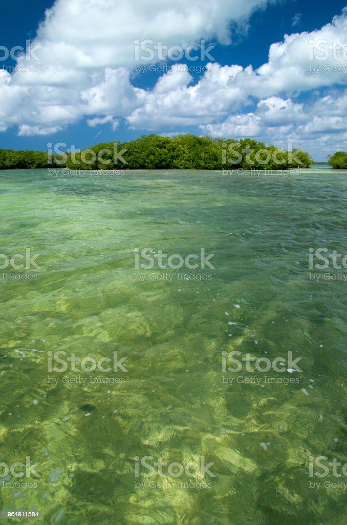 樹林中海 - 免版稅冒險圖庫照片