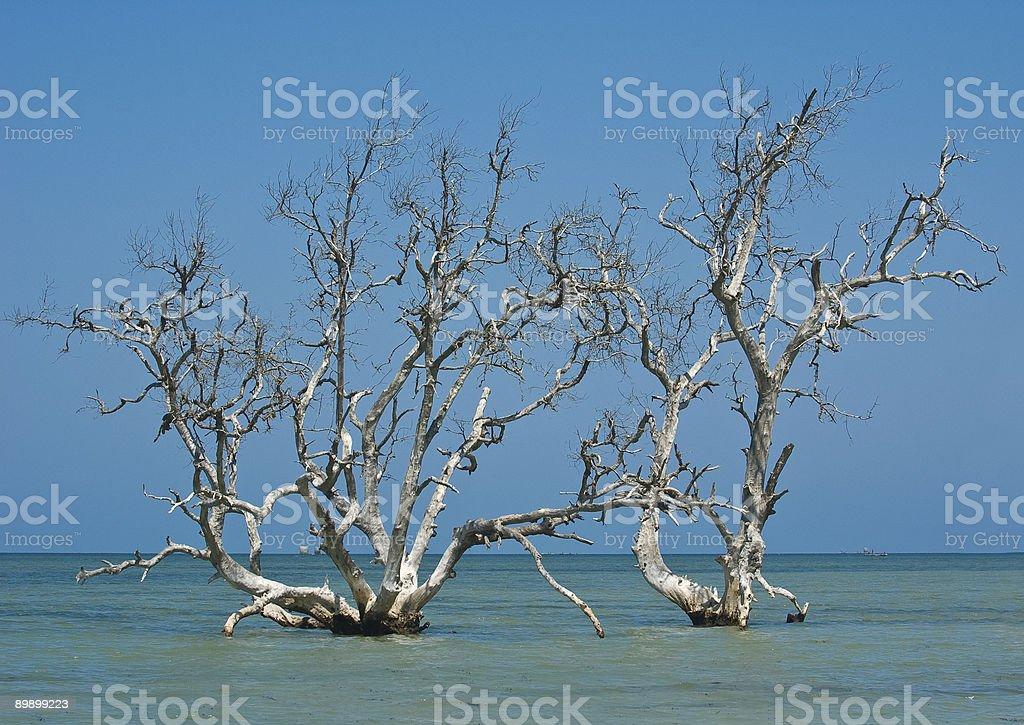 Мангровые деревьев Стоковые фото Стоковая фотография