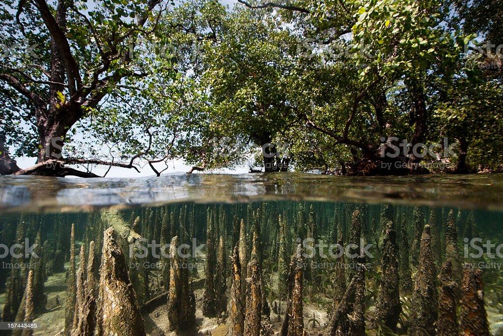 Mangroves at high tide, west side of Bunaken Island, Indonesia stock photo