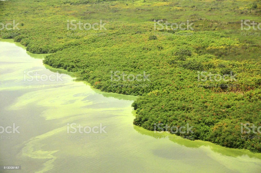 mangroves from the air stock photo