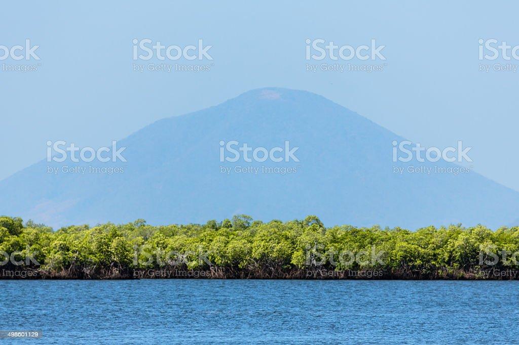 Mangroves in Honduras royalty-free stock photo