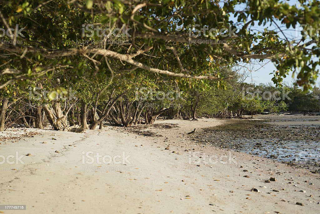 Mangroves in Ten Thousand Islands stock photo