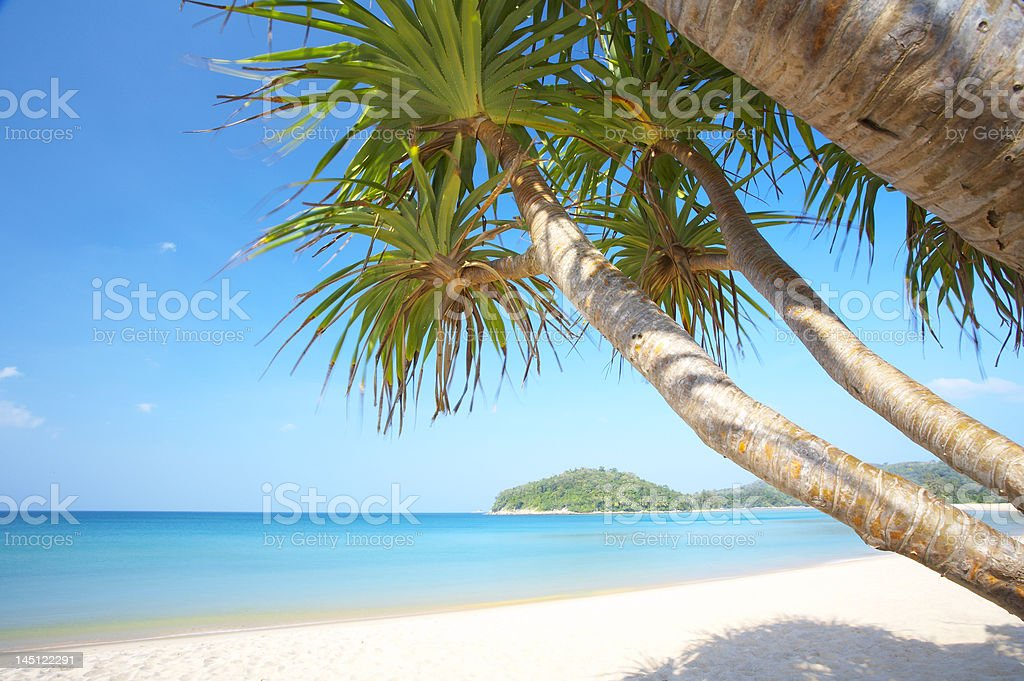 mangroves on beach royalty-free stock photo
