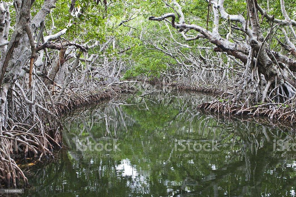Mangroves - Royalty-free Florida - US State Stock Photo