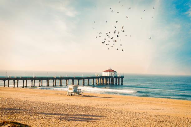 manhattan beach pier med fåglar - badvaktshytt bildbanksfoton och bilder