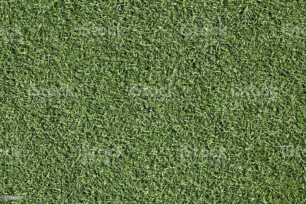 manicured grass royalty-free stock photo