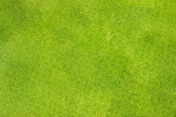 Manicured Green Grass stock photo