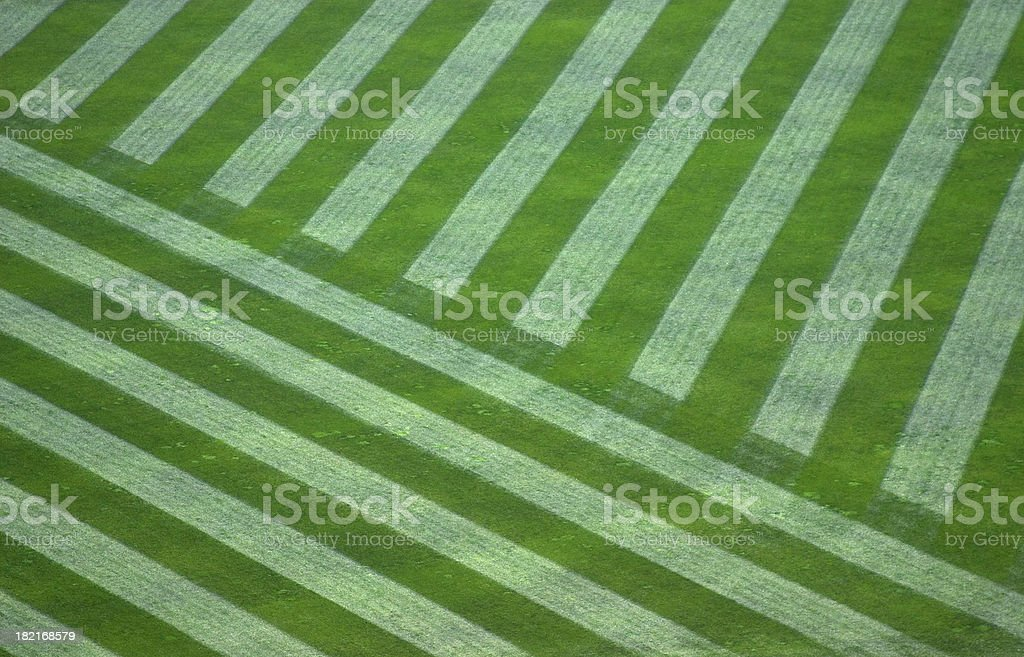 Manicured Outfield Grass royalty-free stock photo