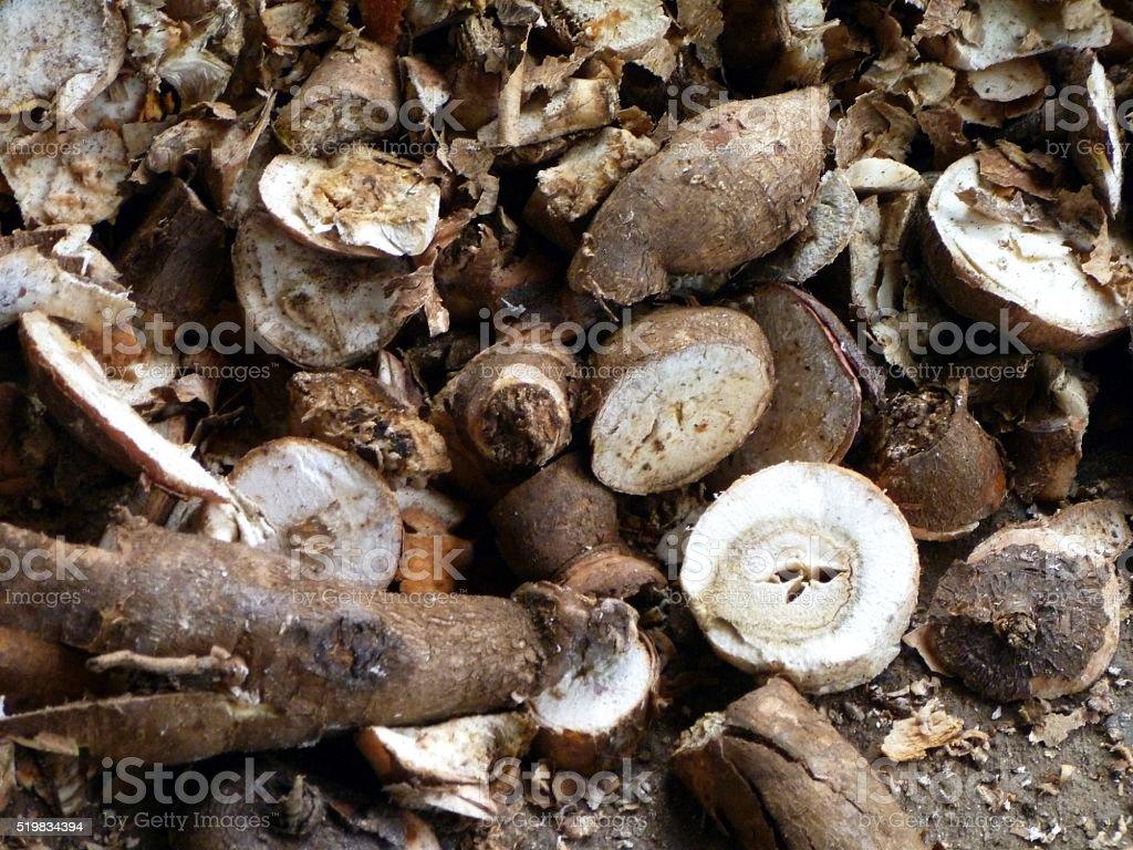 Manihot esculenta, yuca, aipim, mandioca, tapioca, guacamota, casabe, casava stock photo