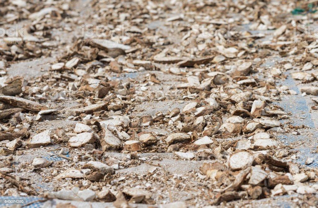 Manioc Root Is Drying Under Sunlight In Mekong Delta Vietnam